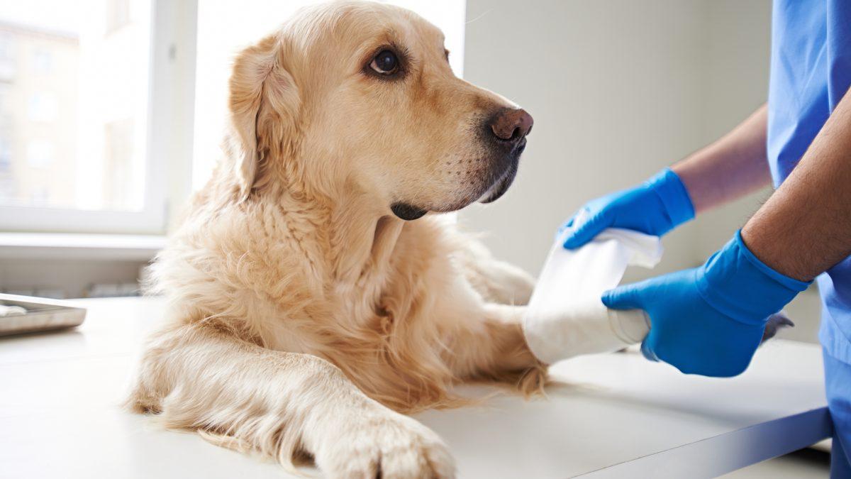 Appel à projets santé animale ANALGESIA